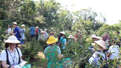 淡水農村採茶籽之旅
